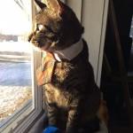 Le chat businessman avec sa cravate : trop chou