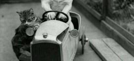 Un chat et un chien sur une voiture – Photo vintage trop mignonne !