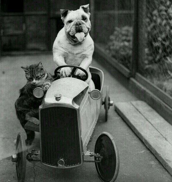 un chat et un chien sur une voiture - Photo vintage trop mignonne !