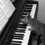 Le chaton qui joue du piano - trop mignon !