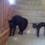 Le chat noir qui fait le dos rond