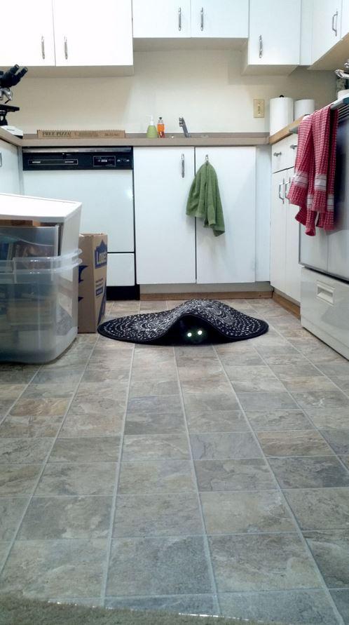 Le chat noir fantôme ! Effrayant