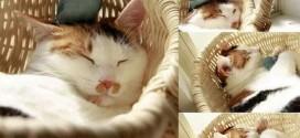 Un chat et un oiseau qui dorment ensemble ! Trop mignon