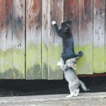 Les chatons qui se font la courte échelle