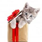 Lolchat fête son premier anniversaire avec de nombreux cadeaux pour vous !