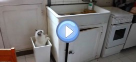 Vidéo du chat Ivanovitch qui tombe plusieurs fois dans une poubelle ! Le pauvre …