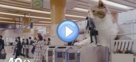 Vidéo d'une publicité japonaise avec un chat géant