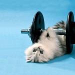 Le chat qui fait du sport avec des halteres