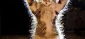Le chaton haut les pattes