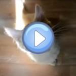 Compilation vidéo n°2 - Chats drôles