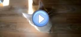 Compilation vidéo n°2 – Chats drôles