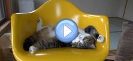 Vidéo Many Maru 11 : Maru dans tous ses états