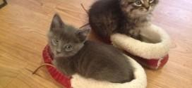 Les chatons dans des pantoufles : trop mignon