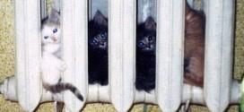 Des chatons qui se cachent dans un radiateur