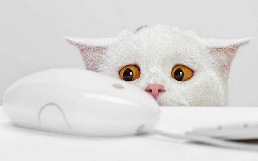 Le chat blanc qui a peur d'une souris