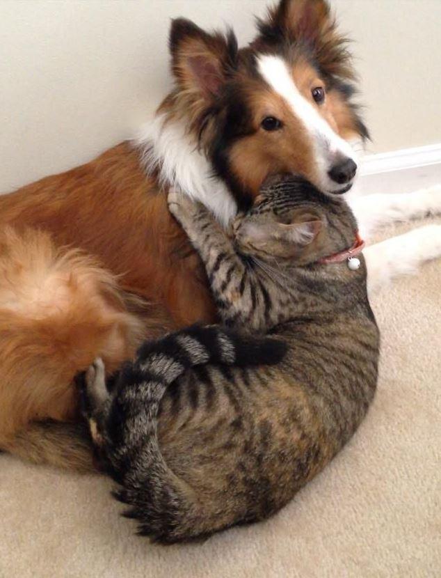 Un chat et un chien meilleurs amis !