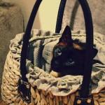 chat-dans-panier