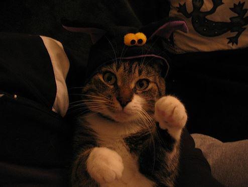 """Résultat de recherche d'images pour """"chats halloween"""""""