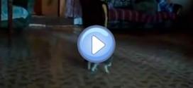 Le chaton qui a peur d'une balle effrayante !