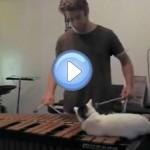 Le chat encombrant qui dérange son maître durant une répétition de xylophone !