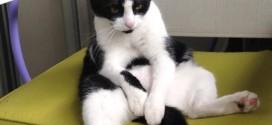 Mizou, le chat penseur !