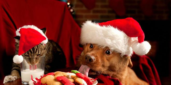 Le chat et le chien qui mangent leur repas de Noël