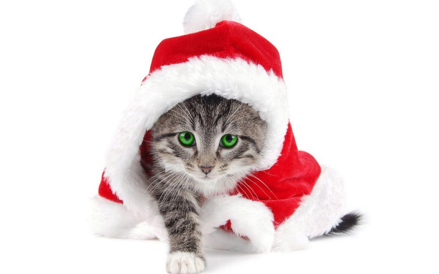 Le chat déguisé en père Noël : trop chou !