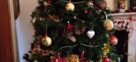 Le chat qui a grimpé dans le sapin et s'y cache
