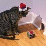Le chat qui veut piéger une souris avec un cadeau de Noël