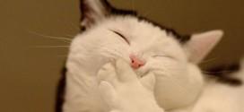 Le chat qui sourit !
