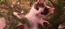 Le chaton qui joue dans le sapin