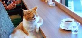 Un chat au café