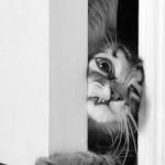 chat forcant l'ouverture d'une porte