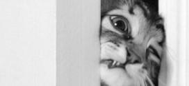 Un chat tente de forcer une porte