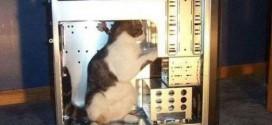 Un chat au support technique