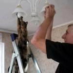 c e chat remplace une ampoule