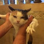 Chat très en colère