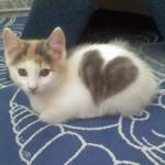 Chaton avec coeur