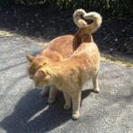 Gros câlin entre chats