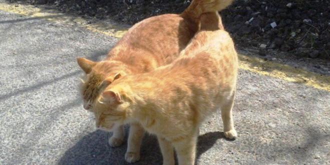 Câlins entre chat