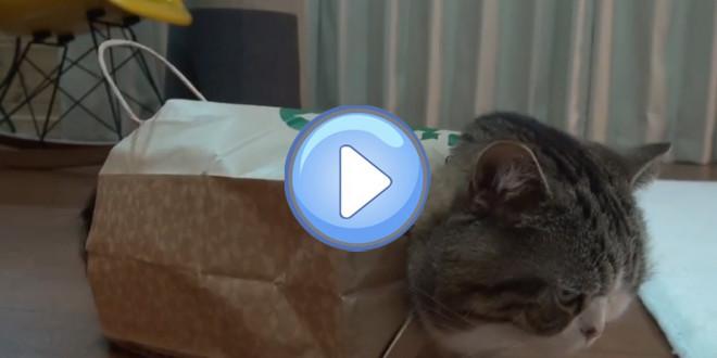 Un chat dans un sac