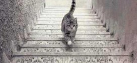 Ce chat monte-t-il ou descend-il les escaliers ?