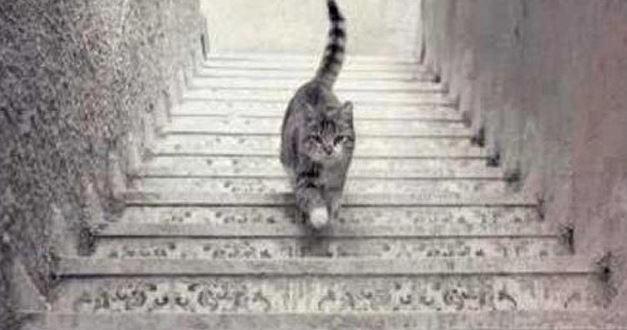 Ce chat monte-t-il ou descend-il les escaliers ?