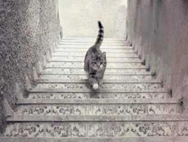 Ce chat monte-t-il ou descend-t-il les escaliers ?