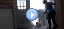 Un chat fait un trou dans la neige pour rentrer chez lui