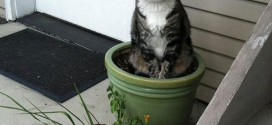 Chat plante verte