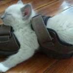 un chaton dors dans une sandale