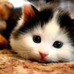 un chat ressemblant à une souris
