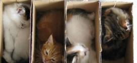 Des chatons bien rangés !