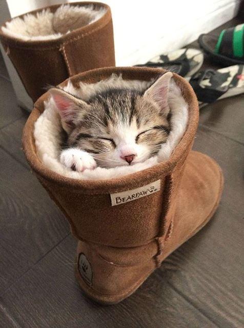 ce chaton fait un p'tit somme dans une botte fourrée